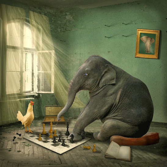 elephant-chess-ethiriel-photography